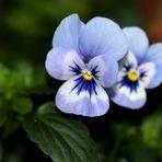 ~ Blumen sind das Lächeln der Natur ~