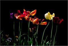 Blumen sind verblüht