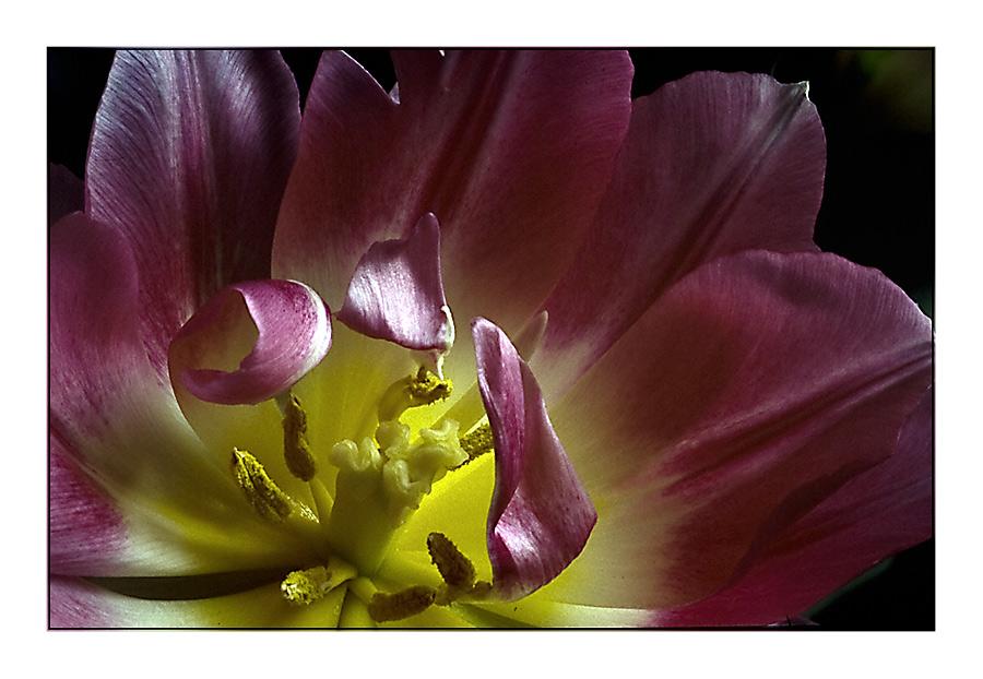 Blumen-Stempel