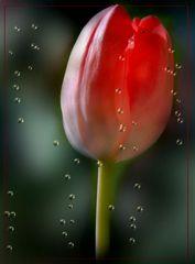 Blumen Traum…..