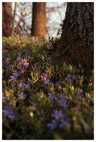 Blumen und Baum