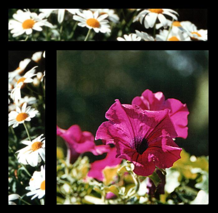 Blumen und Blumen