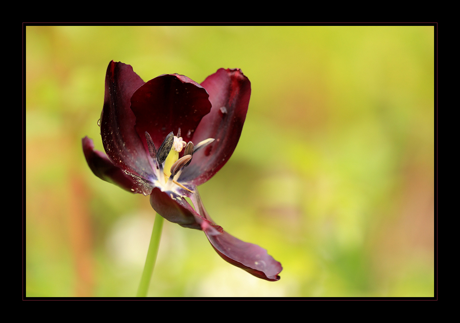Blumen und Licht am Morgen vertreiben Kummer und Sorgen!
