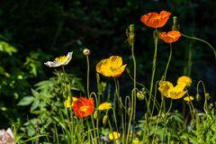 Blumen von Labrador     DSC_2402