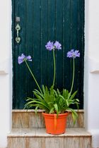Blumen vor der Tür