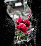 Blumen wachsen überall