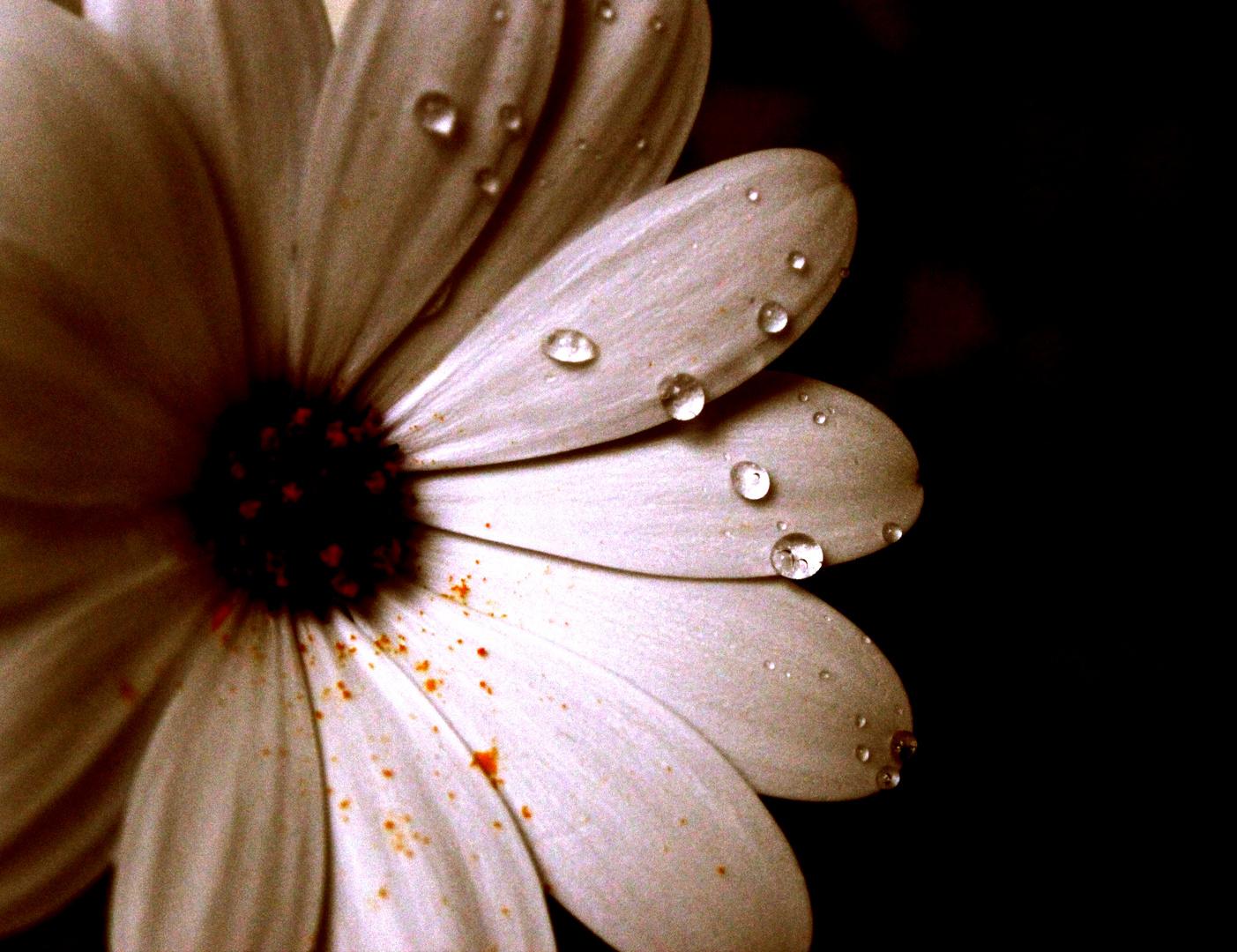 Blumen-Wasser-Spiel