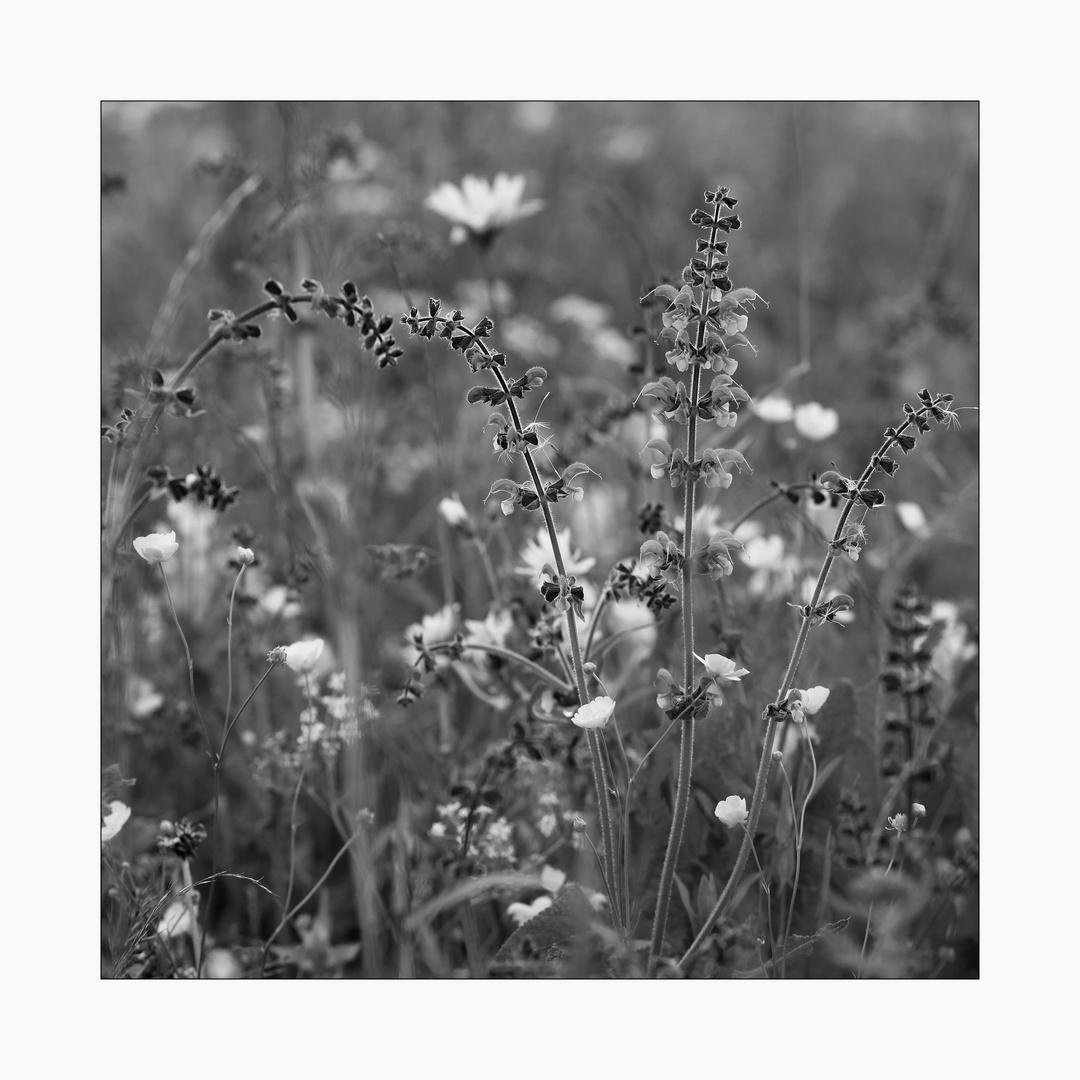 Blumen-Wiese