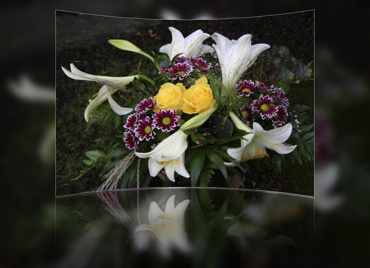 blumen zum geburtstag foto bild pflanzen pilze flechten bl ten kleinpflanzen. Black Bedroom Furniture Sets. Home Design Ideas