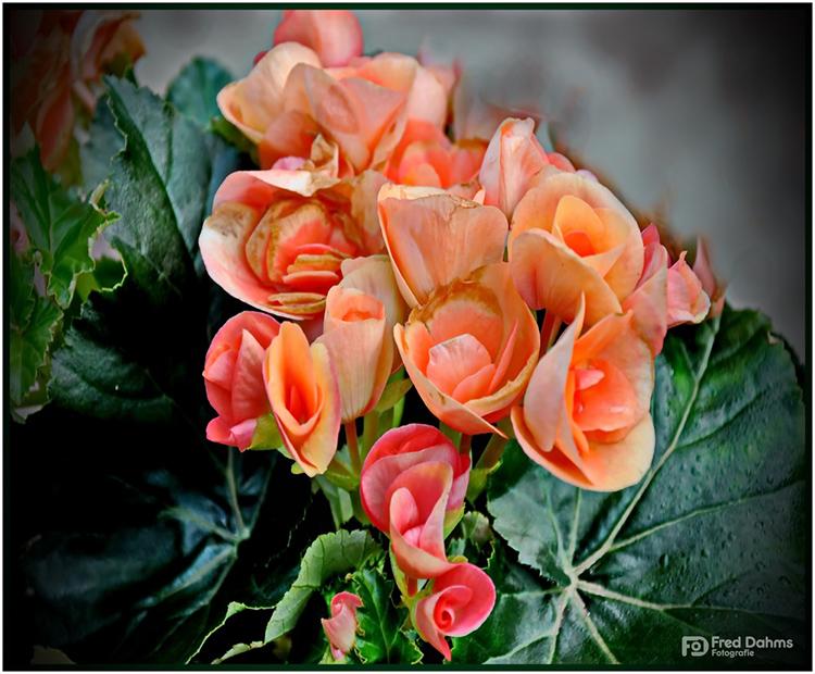 Blumen zum Sonntag