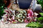 Blumen zur Wochenmitte