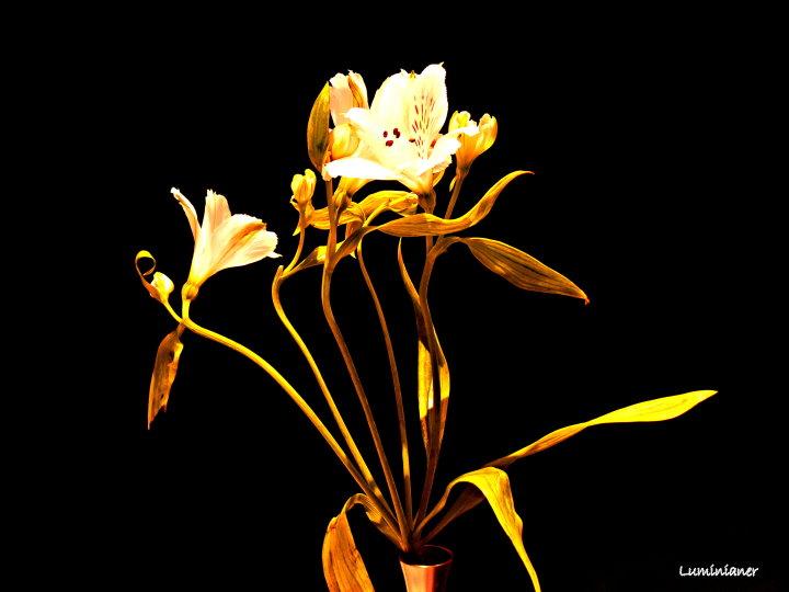 Blumenaquarelle sind doof