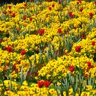 Blumenbeet in nZürich Mai 2011