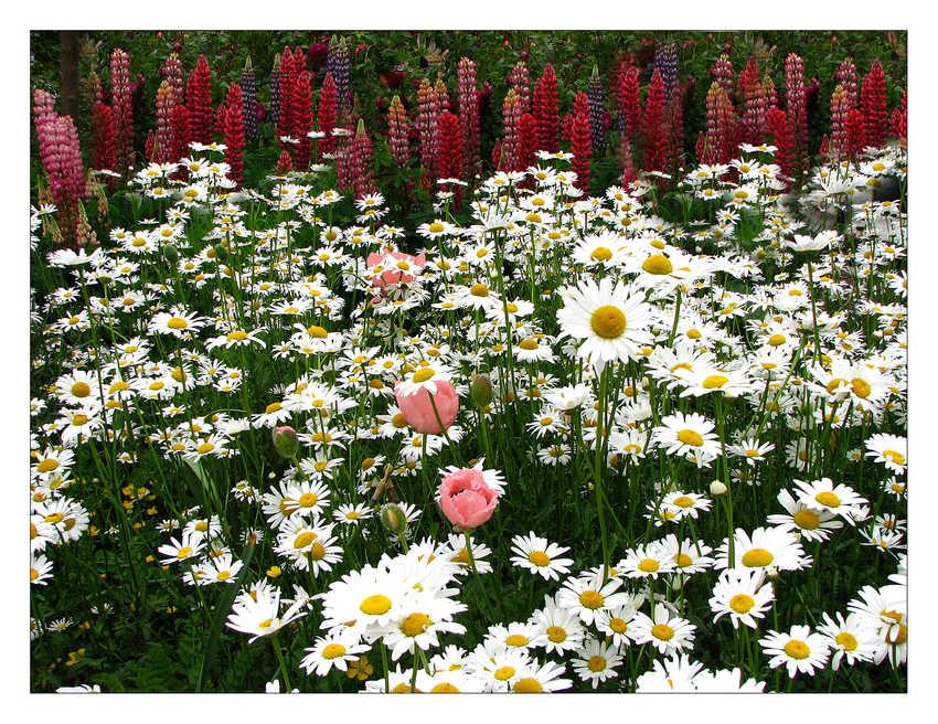 Blumenbeet Schloss Ippenburg