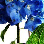 Blumenbilder 12
