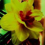 Blumenbilder 35