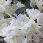 Blumenbilder 48