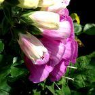 Blumenbilder 71