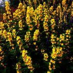 Blumenbilder 77