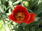 Blumenblüte 2