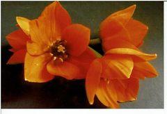 Blumen,Blüten