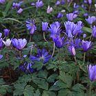 Blumen_Botanischer Garten