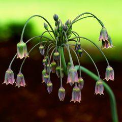 Blumenbronnen