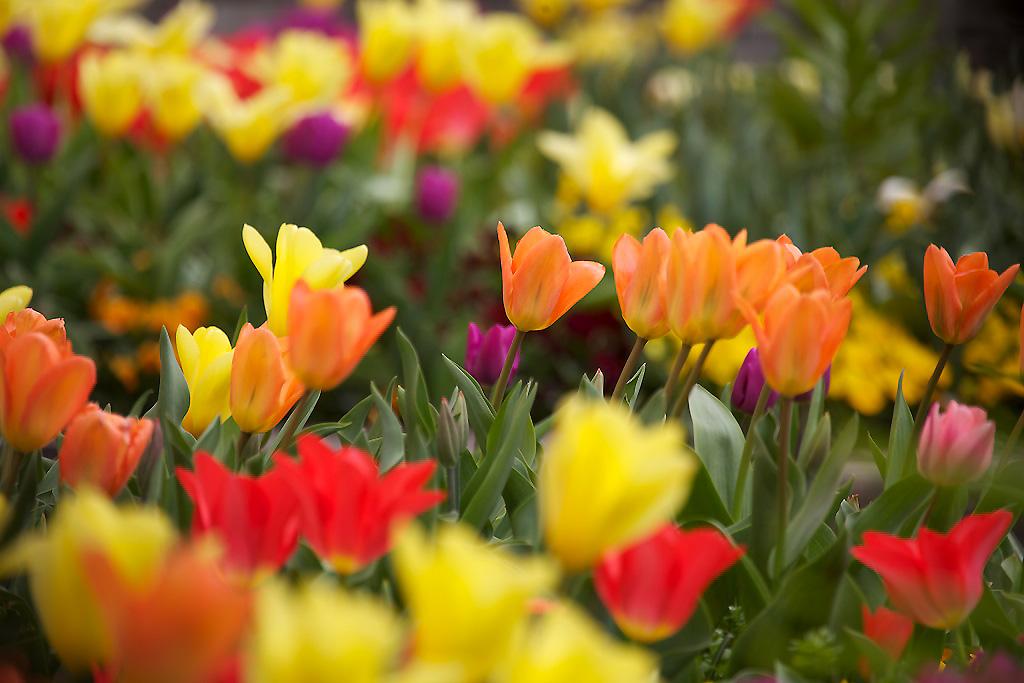 Blumenbunt