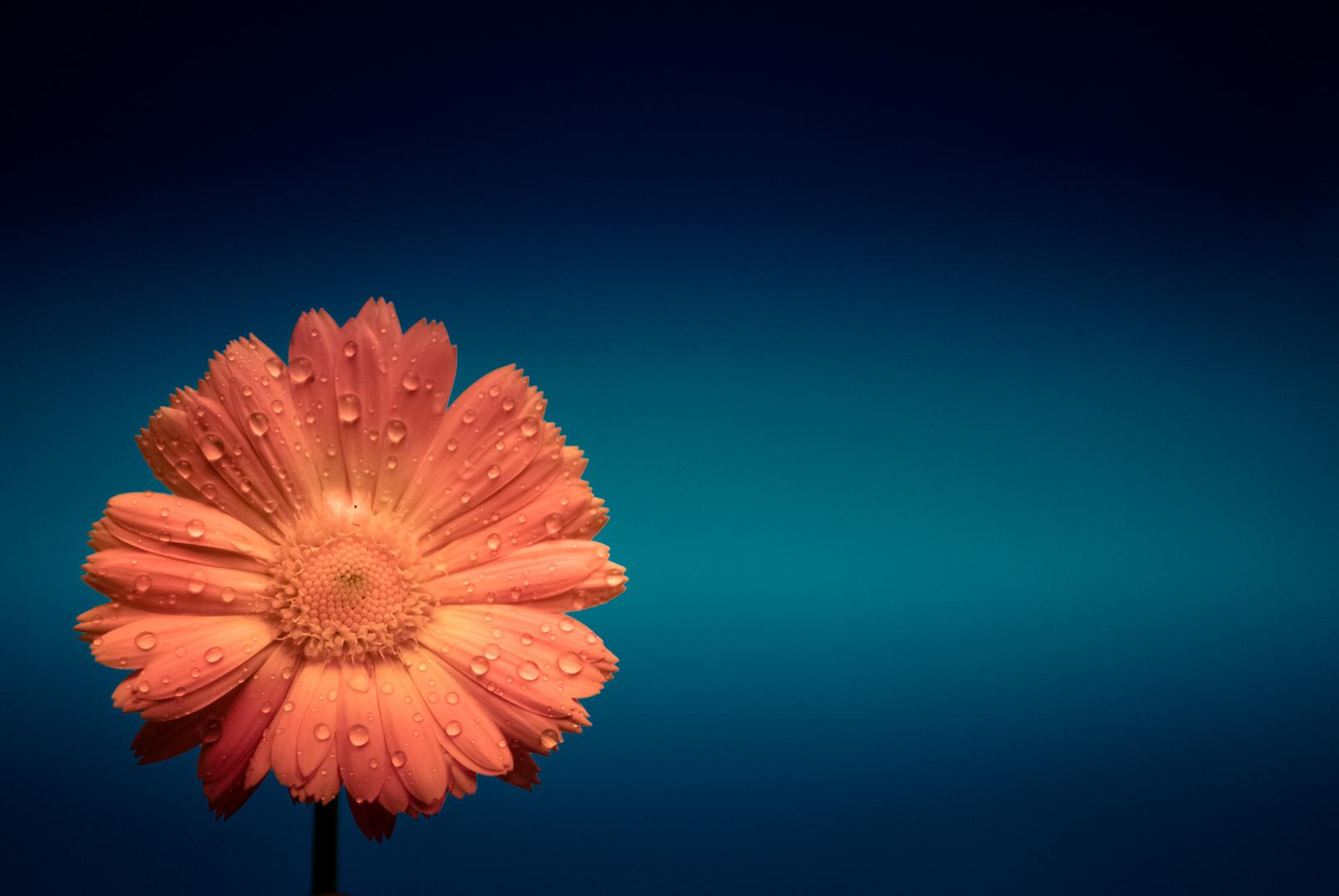 Blumenexperiment