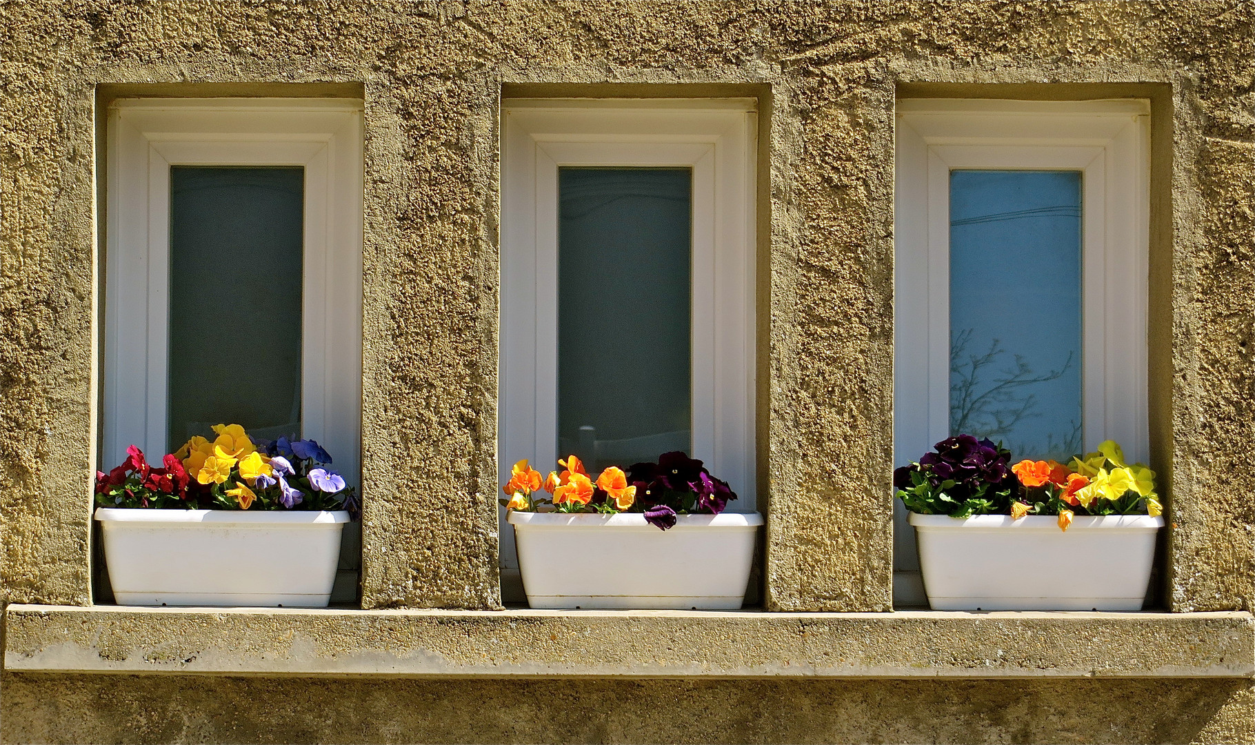 .. Blumenfenster !!!...