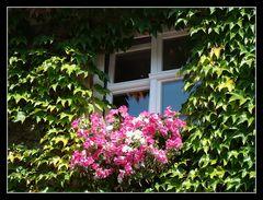 """"""" Blumenfenster """""""