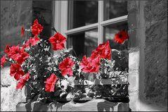 Blumenfenster III
