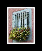 Blumenfenster in der Badstrasse  / Blumen komplett