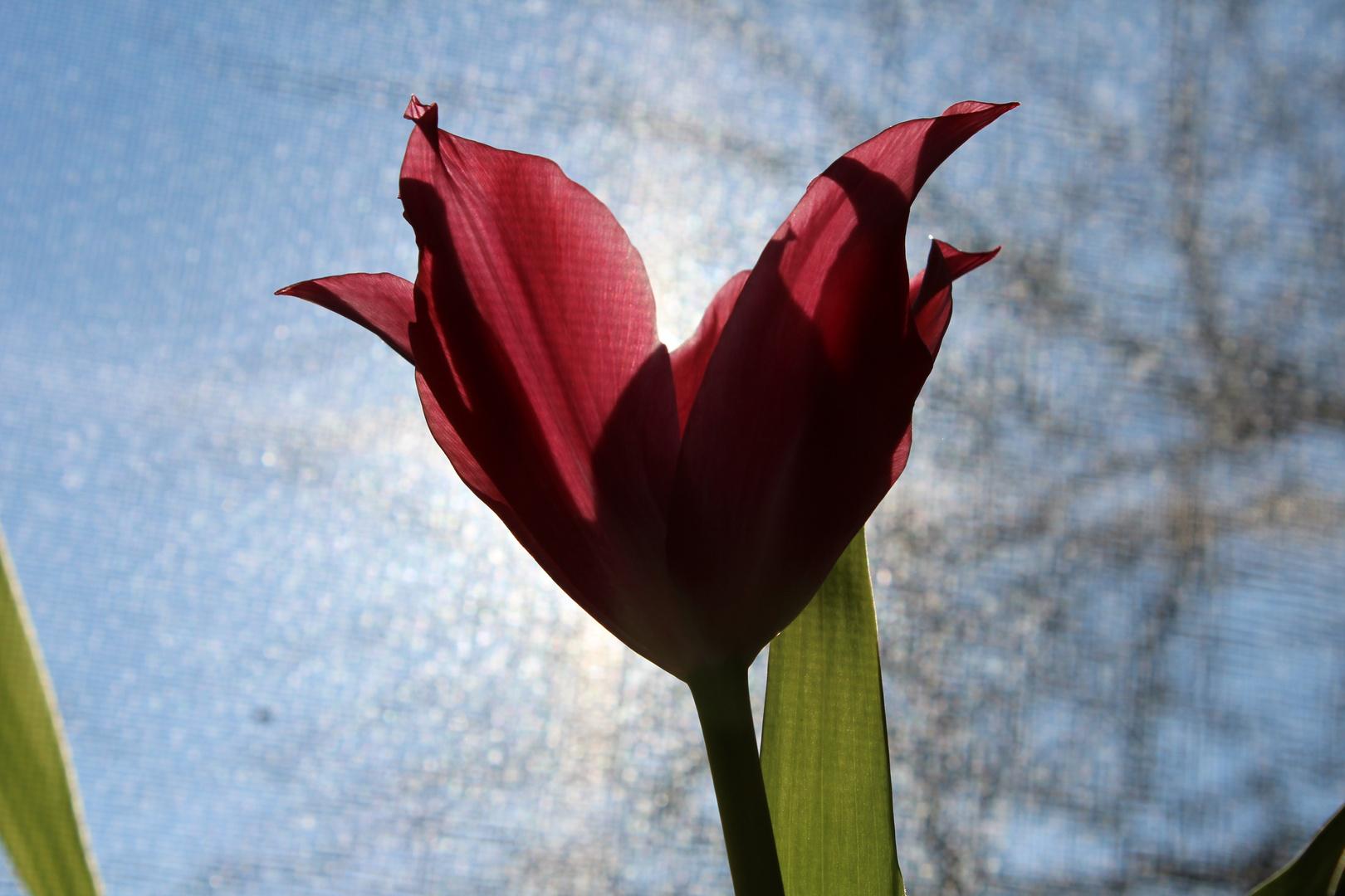 Blumenfinsternis