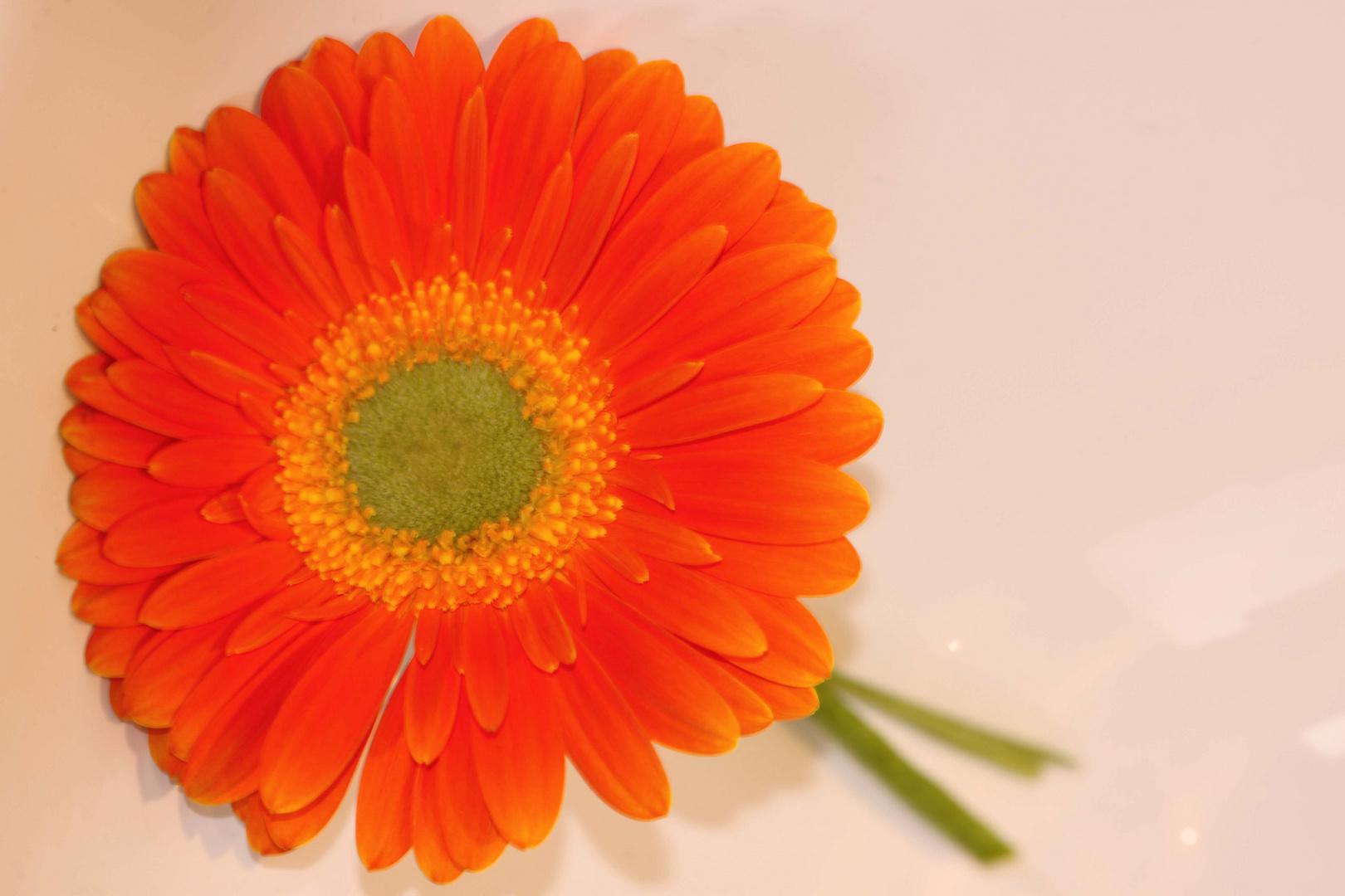 Blumenfreude 1