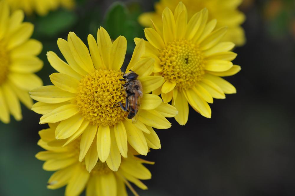Blumengrab
