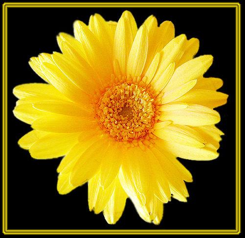 Blumengrüße *