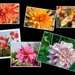 Blumengrüße aus dem Britzer Garten