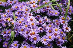 Blumengrüße zum letzten März-WE
