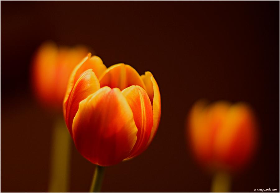 *Blumengruß*