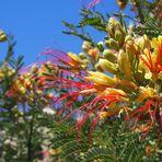 Blumengruß aus Ägypten