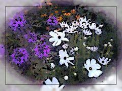 Blumengruss aus meinem Garten