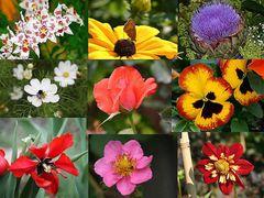 Blumengruß aus sommerlichen Zeiten