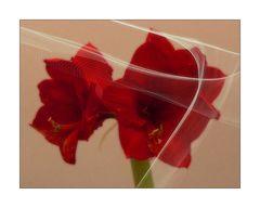 Blumengruß mit Ritterstern