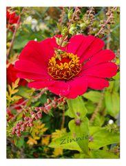 Blumengruß zum Wochenende