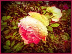 Blumengruß zum zweiten Adventswochenende