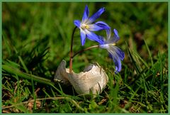 Blumenhaus ...