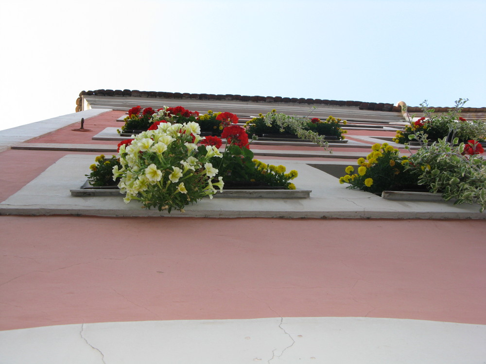 Blumen,Himmel und Haus