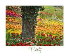 Blumeninsel