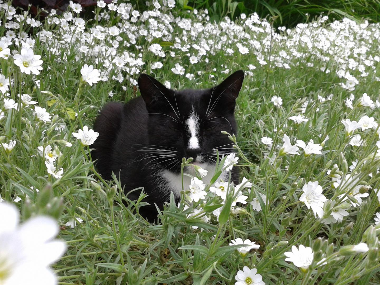 Blumenkater